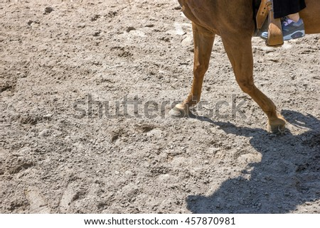 Horse when riding in the paddock on sand #457870981