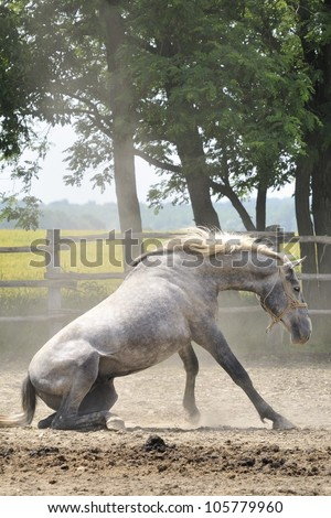 Horse who loves rolling in the dust