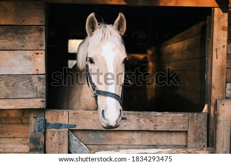 Horse with a white stripe in the stable. High quality photo Photo stock ©