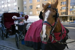 Horse with carriage waiting for customers next to the Central park in New York