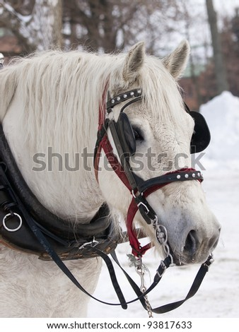 Horse with hat pulling sleigh in winter