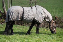 Horse with horse fly sheet and mask for protection against insects grazing in a pasture