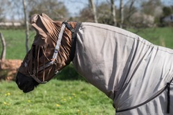 Horse with horse fly sheet and mask for protection against insects in a pasture