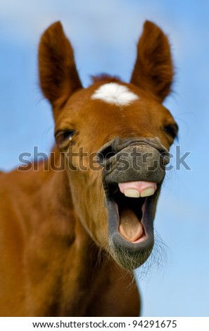 Horse with mouth open looking like