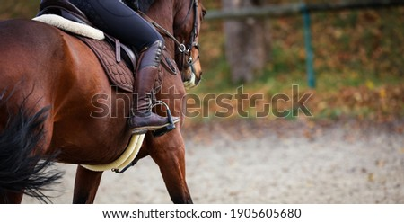 Horse with rider close up of riding boot in stirrup, focus on the boot photographed from behind. Foto stock ©
