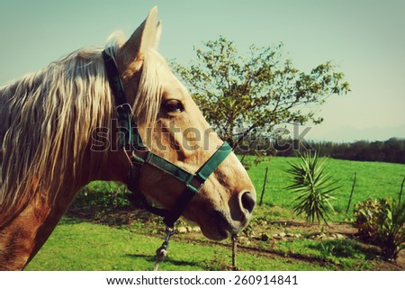 stock-photo-horse-with-white-mane-on-green-field-260914841.jpg