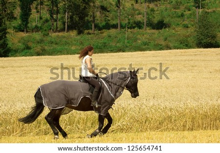 Horseback rides on the field. The horse is protected from insects with blanket-net.