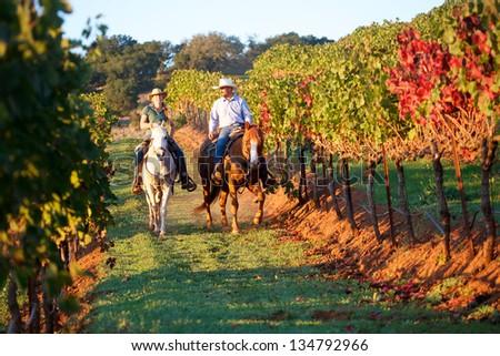 Horseback riding couple in a vineyard in autumn