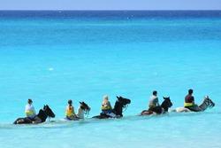 Horseback riding tour social distanced the in ocean, visitors / travel scene in the Caribbean