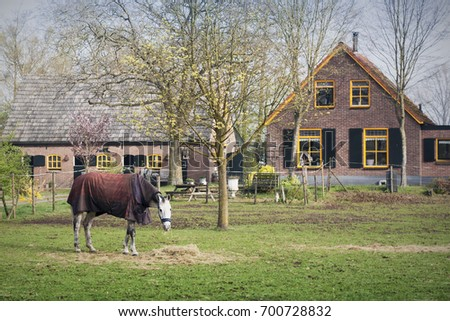 Horsecloth on horse at farm with tiny house on background. Knight horse eating grass. Cloth horse in countryside #700728832