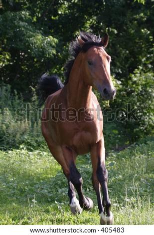 Horses 69