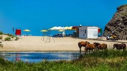 Horses along the coast of river Veleka until Sinemorets. Bulgaria part 2