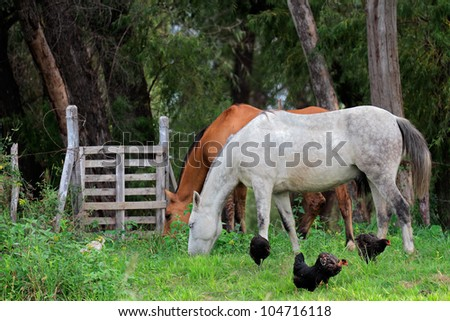 Horses and chickens on a rural ranch with lush green pasture
