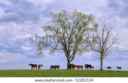 Horses and Trees, Lexington Kentucky
