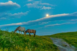 Horses are grazing in the Central Balkan national park in Bulgaria during sunset