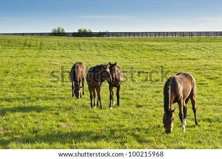 Horses at farmland in Kentucky