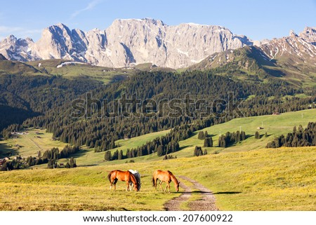 Horses at high mountains meadow #207600922