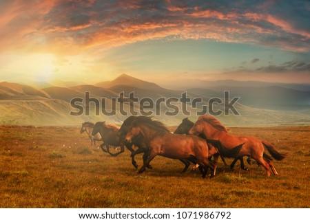 horses at mountain meadows ...