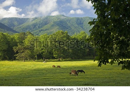 Horses, Cades Cove, Great Smoky Mountains National Park, Tennessee