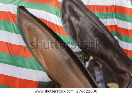 Horses Colors Abstract\ Horse pony grooming neck hair mange body cover closeup abstract animal detail.