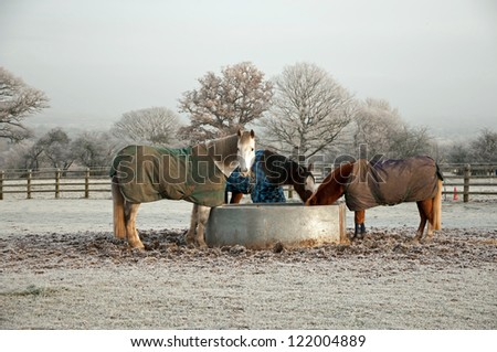 Horses eating from field feeder on a cold winters morning