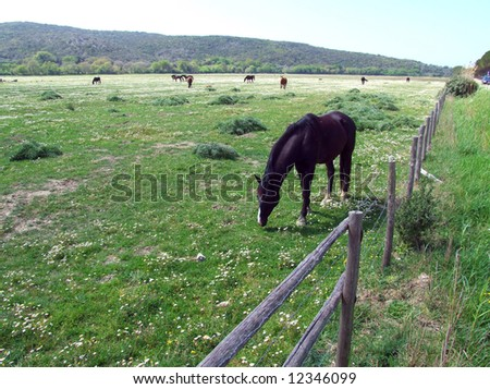 Horses eating grass on a green field