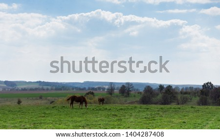 Horses graze in the meadow, fields and meadows, landscape #1404287408