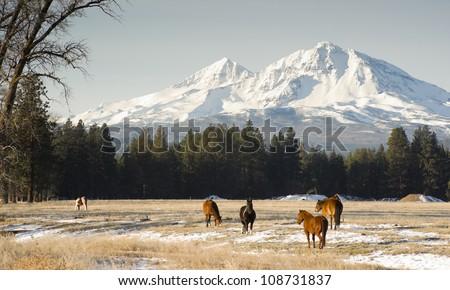 Horses graze near base of Three Sisters Oregon State mountain landscape