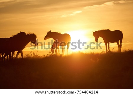 Shutterstock Horses graze on pasture at sunset.   The horse (Equus ferus caballus) is one of two extant subspecies of Equus ferus. It is an odd-toed ungulate mammal belonging to the taxonomic family Equidae.