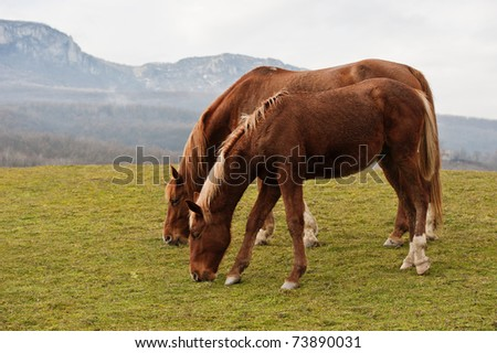 Horses grazed on a mountain pasture against mountains - stock photo