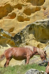 Horses grazing beneath colorful sandstone rock formations on the Basque coast. Mount Jaizkibel, Hondarribia, Spain