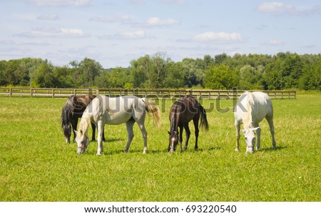 horses grazing in a field near the paddock #693220540