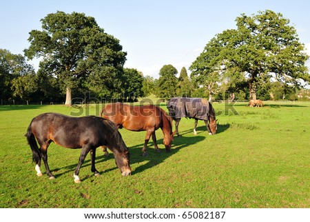 Horses Grazing in a Green Field