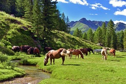 horses grazing in a green valley