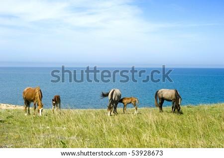 Horses grazing in front of the sea. Crimea. Ukraine