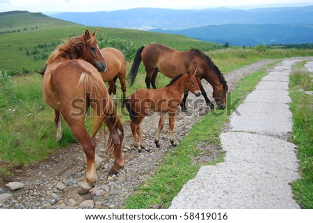 horses grazing in highlands