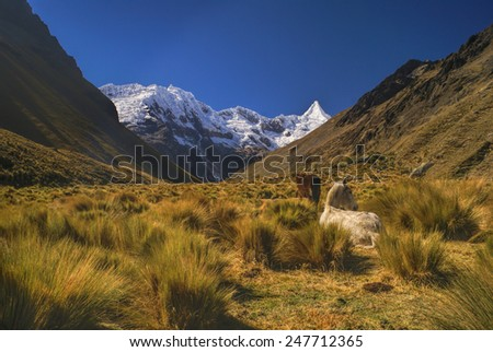 Horses grazing in scenic valley between high mountain peaks in Peruvian Andes