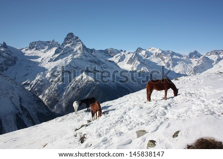 Horses grazing in the mountains in winter