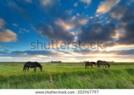 horses grazing on pasture at sunset in summer #202967797