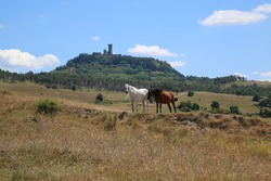 Horses grazing on the hills around the small town of Radicofani in Tuscany