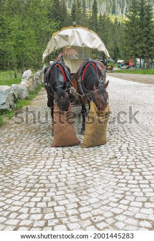 Horses grazing, two horses harnessed to the cart are waiting for passengers who want to enter Morskie Oko and eat the given fodder. Stock fotó ©