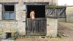 Horses head looking out of open stable with door open on a farm taken Cotswold, Gloucestershire, England, UK