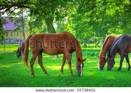 Horses. Herd of horses on green pasture.