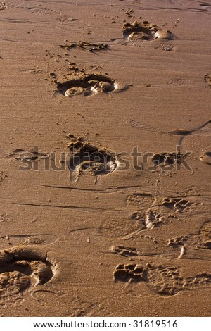Horses hoof prints in the sand