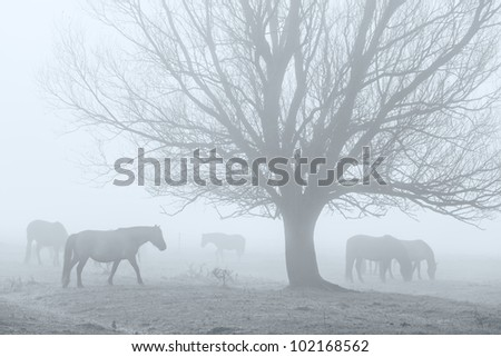 Horses in a field in the fog - stock photo