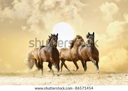 horses in autumn sunset
