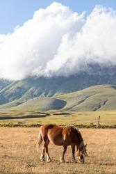 Horses in Campo Imperatore Abruzzo