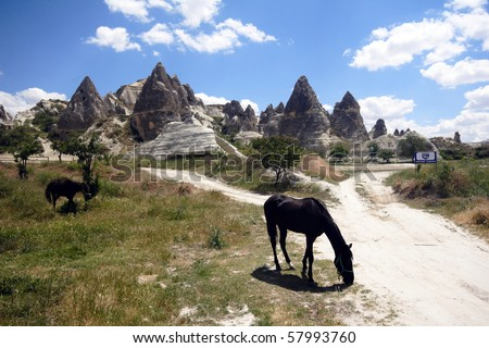 Horses in Cappadocia - stock photo