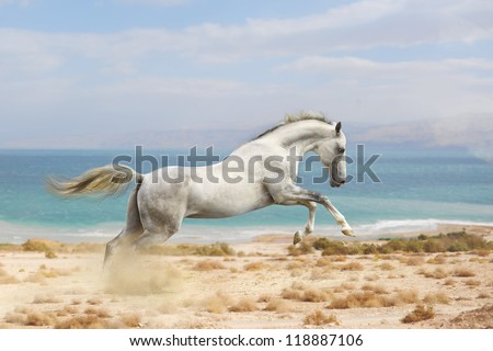 horses in desert - stock photo
