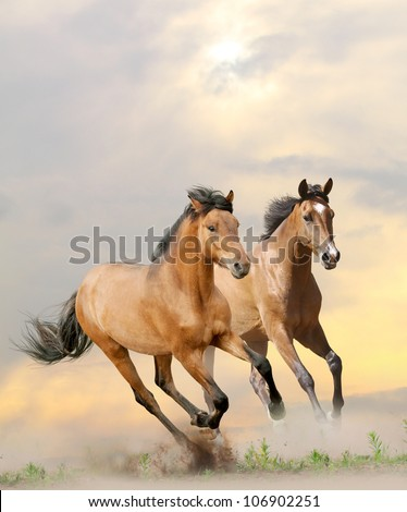 horses in dust in sunset